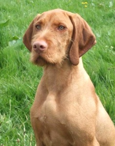 02nd-may-at-mid-western-gundog