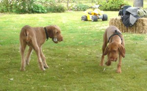 9th May - Litter Reunion playing with Dolly 2