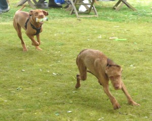 Romping with sister Dolly.
