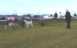 Being Awarded 1st in Junior Class at North Devon Show.