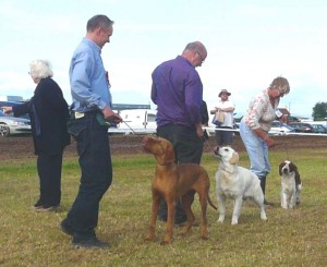 Gundog Puppy Group 1, 2 & 3 at North Devon Show