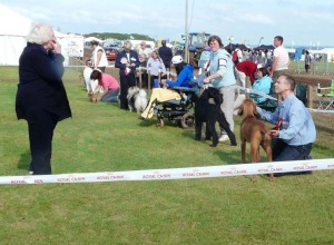 Lined up for Best Puppy in Show at North Devon Show.