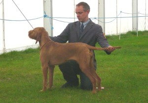 Welsh Kennel Club - Standing as Best Puppy.