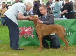 Welsh Kennel Club - teeth examination.