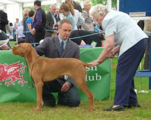Welsh Kennel Club - the examination.