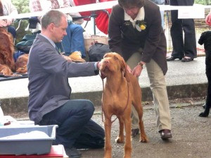 Okehampton Show - the examination (minus front feet!).
