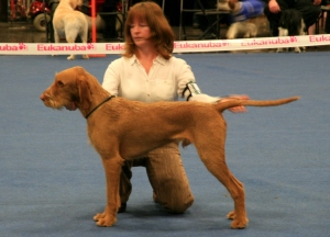 Charlie in the ring at Boston Championship.