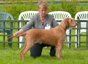 Belatarr Mahalia Jackson - on her way to Best in Show.