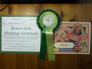Django's first Challenge Certificate AKA the big win!