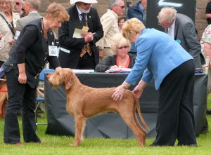 The judge going over Gryphon in the Open Dog class.
