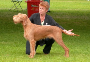 Gryphon in the Open Dog Class.