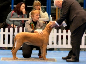 Billie reprsenting the Gundog Group in the Best In Show ring.