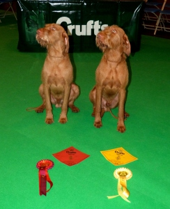 Charlie & Herc with their Crufts winnings!