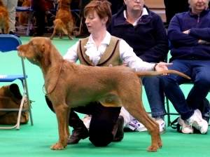 Belatarr Charlie Parker stacked in the Limit Dog Class.