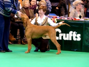 Belatarr Hercules - examined in the Post Graduate Dog Class.