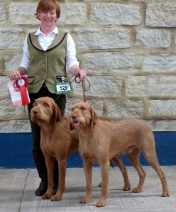 Belatarr Hercules and his brother Belatarr Charlie Parker with their 1st place Brace win.