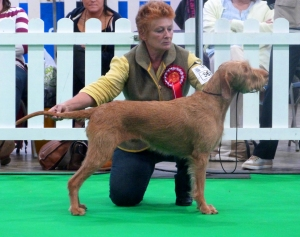 Belatarr Mahalia Jackson ShCM - 1st Open Bitch, Best Bitch, Best of Breed