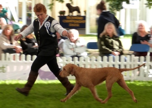 and on the move with Irene in the Gundog Goup.