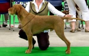 Belatarr Charlie Parker - 1st Open Dog & Best Dog.