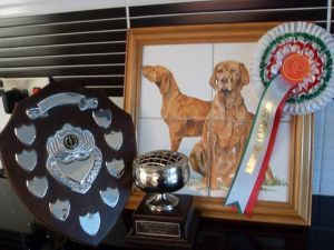 North's three HWVA trophies for 1st Minor Puppy Dog, Best Puppy Dog & Best Puppy in Show.