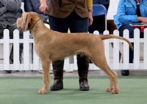 North freestanding beautifully in the Gundog Group.