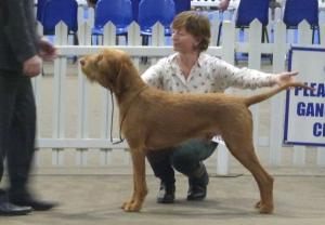 Belatarr Herules - 1st Post Graduate Dog + BEST DOG.