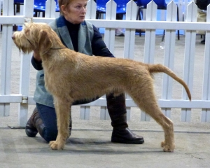 Belatarr North By Northwest - 1st Puppy Dog.