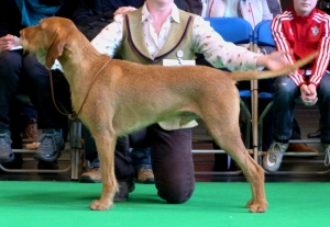 Belatarr Charlie Parker ShCM - 3rd in Open Dog