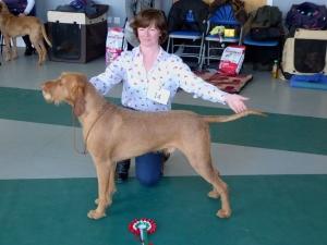1st Open Dog + BEST DOG - Belatarr Charlie Parker ShCM