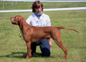 Belatarr Hercules - Best Dog at Southern Counties Championship.