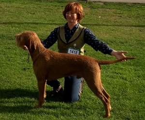 Hercules and Jenny at Gundog Society of Wales Championship.