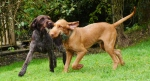 Rufus 5mths andBella2