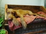 Rufus 5mths studiosleep