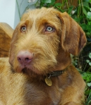 Rufus 5mths1